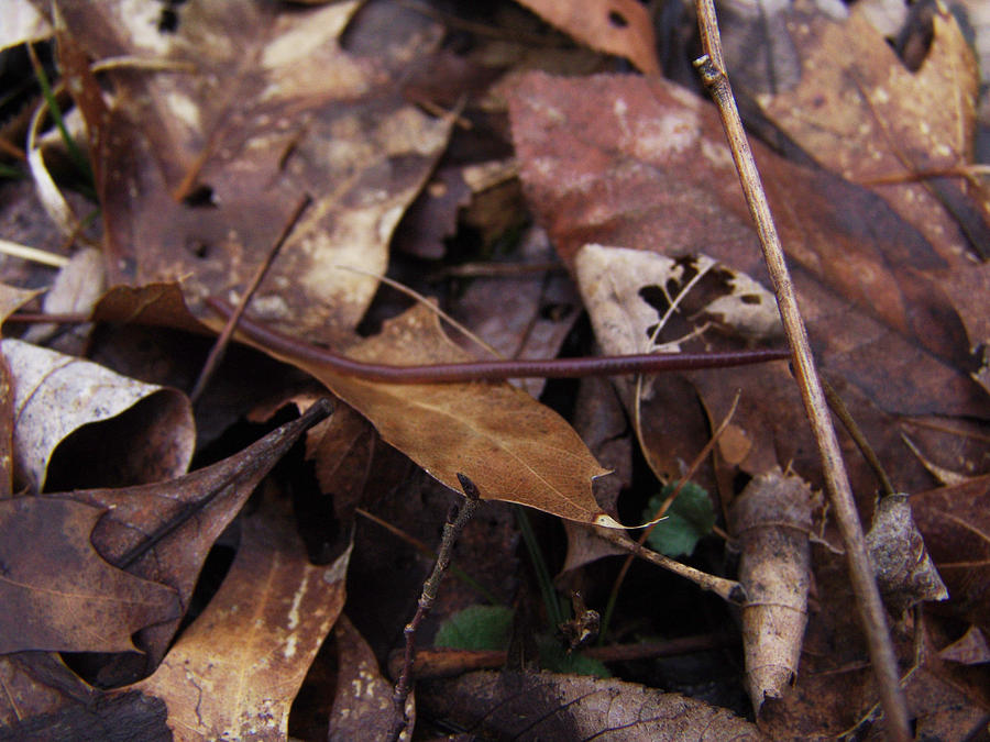 Leafs Photograph - Leafs With Worm 013 by Ryan Vaal