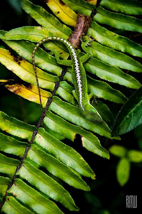 Lizard Photograph - Leafy Lizard by Benjamin Weilert