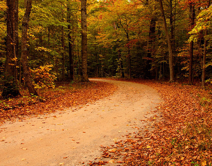 Fall Colors Photograph - Leafy Road by David Nicely