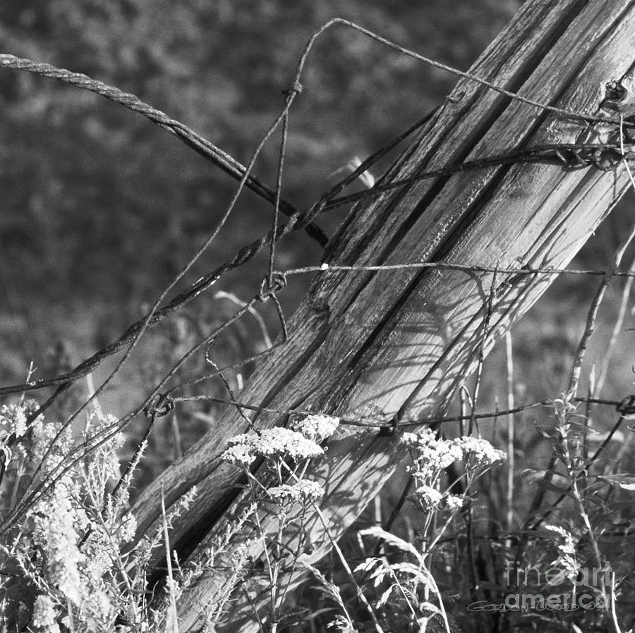 Farm Photograph - Leaning Farm Fence Post Amongst Weeds In Evening Sun by Gordon Wood
