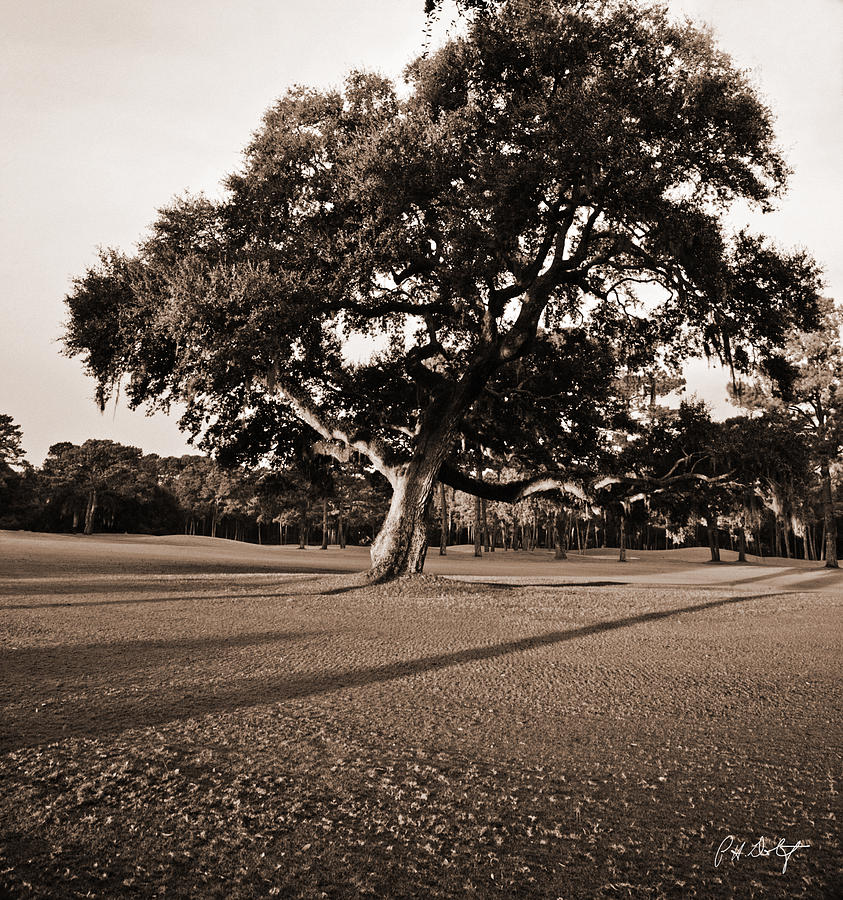 Black & White Photograph - Leaning Tree by Phill Doherty
