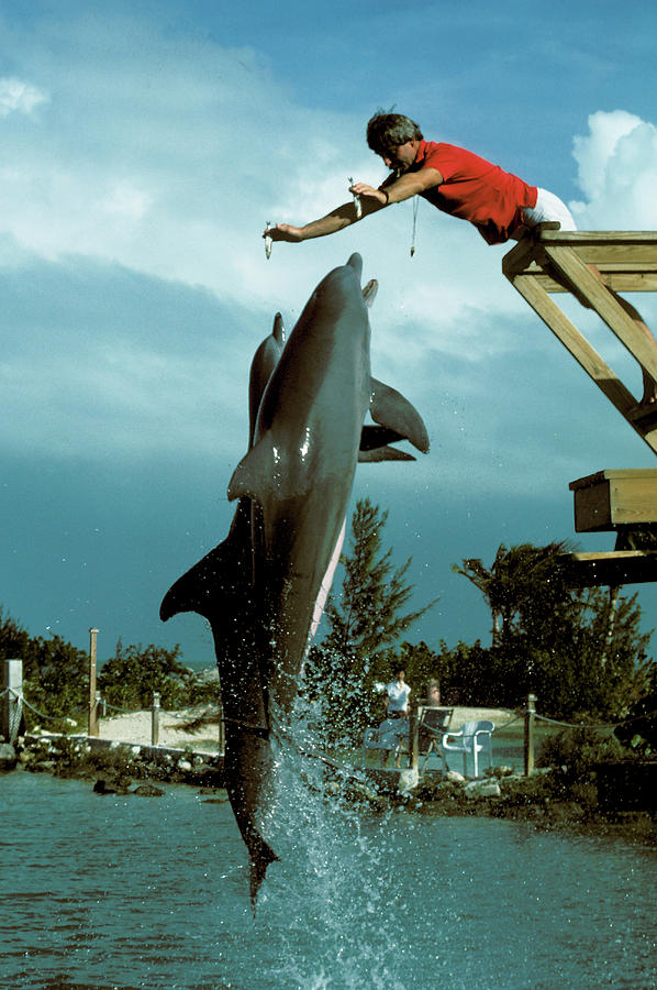 Leaping Dolphins At Hawks Cay Photograph by Carl Purcell