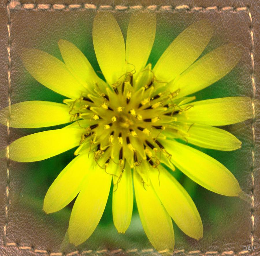 Wildflower Photograph - Leather Capture by Debra     Vatalaro