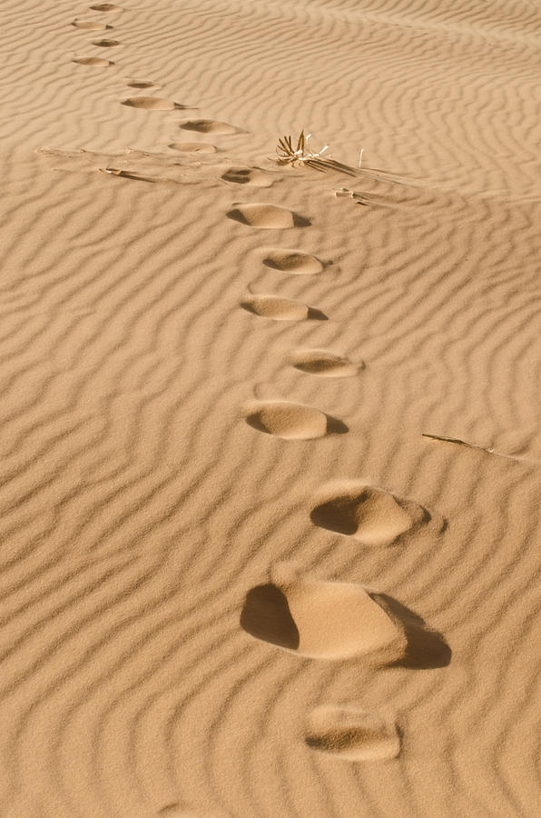 Coral Pink Sand Dunes Photograph - Leave Only Footprints by Heather Applegate