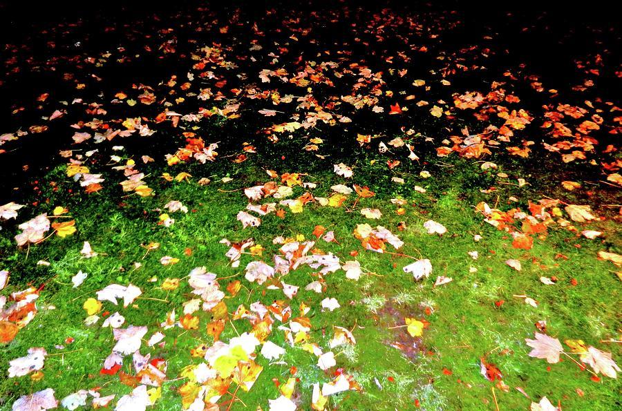 Nikon Photograph - Leaves 2 by Nik Watt