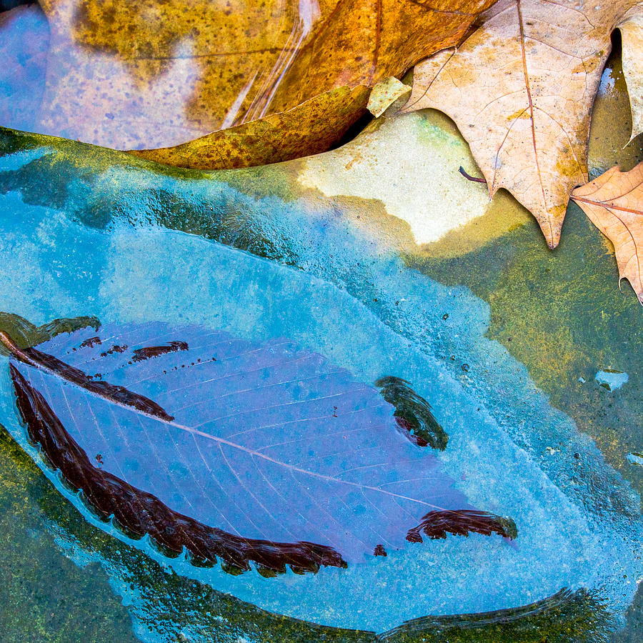 Woodlands Photograph - Leaves by Adam Kilbourne