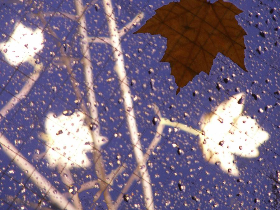 Leaves Photograph - Leaves And Rain 2 by Tim Allen