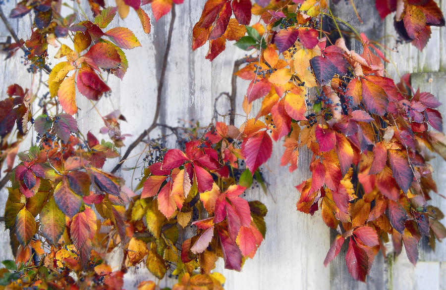 Color Photograph - Leaves And Vines by Donald Schwartz