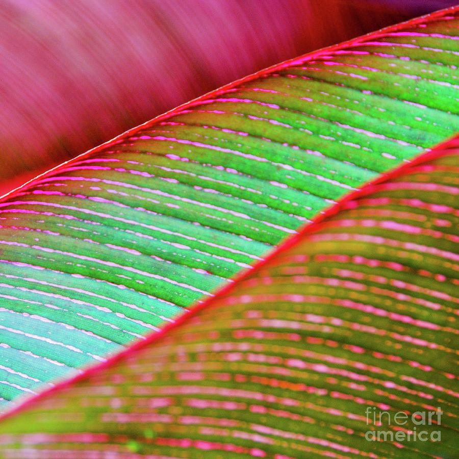 Leaf Photograph - Leaves In Color  by D Davila
