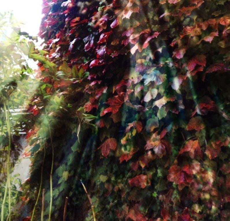 Vine Photograph - Leaves Light Streaming by Rita Koivunen