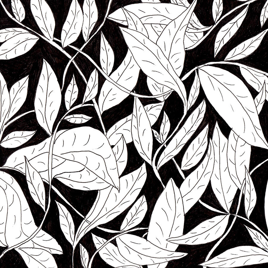 Leaves Drawing - Leaves by Lou Belcher