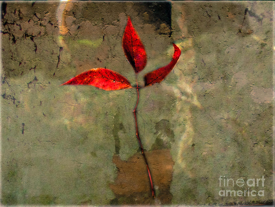 Leaf Photograph - Leaves Of Autumn  by Steven Digman