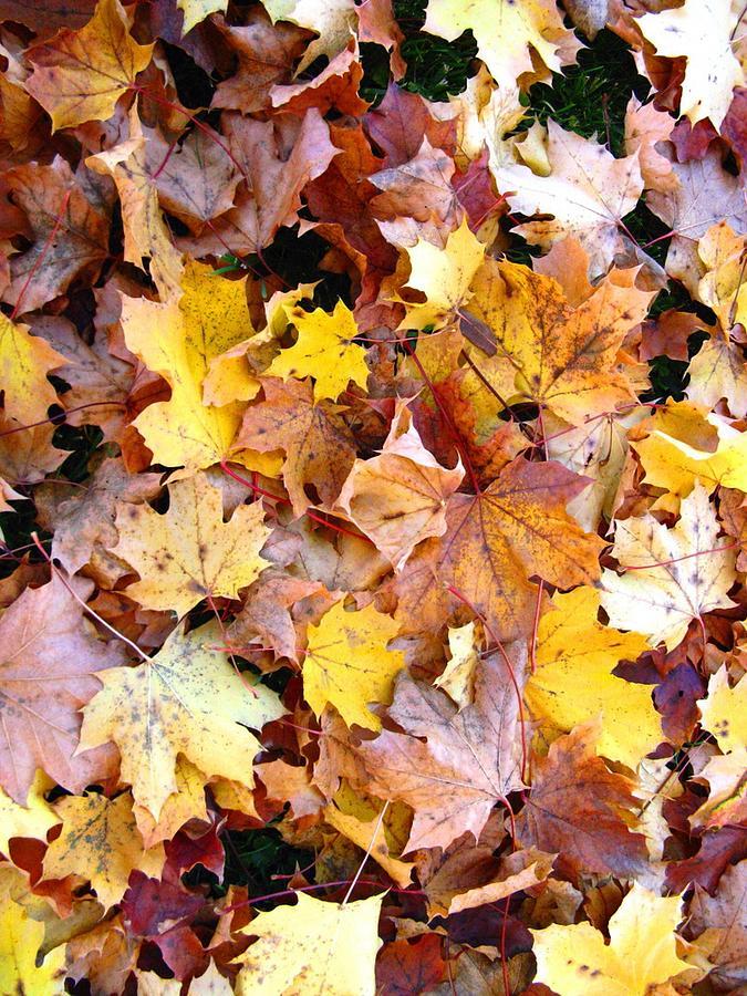 Leaves Photograph - Leaves Of Fall by Rhonda Barrett