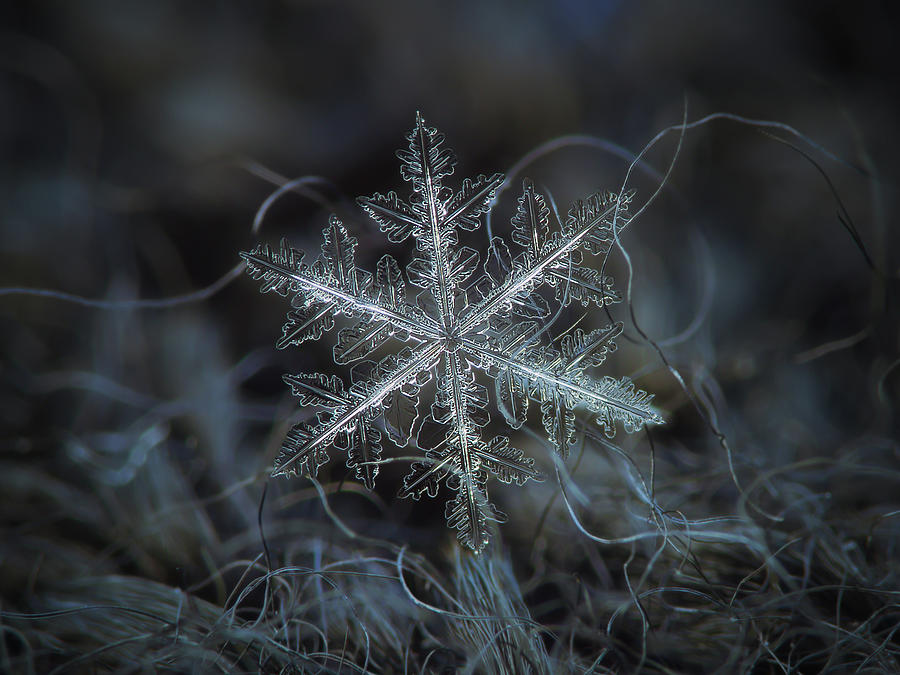 Leaves of ice by Alexey Kljatov