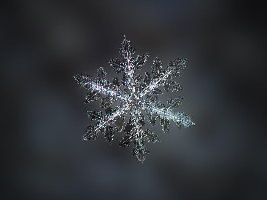 Snowflake Photograph - Leaves Of Ice II by Alexey Kljatov