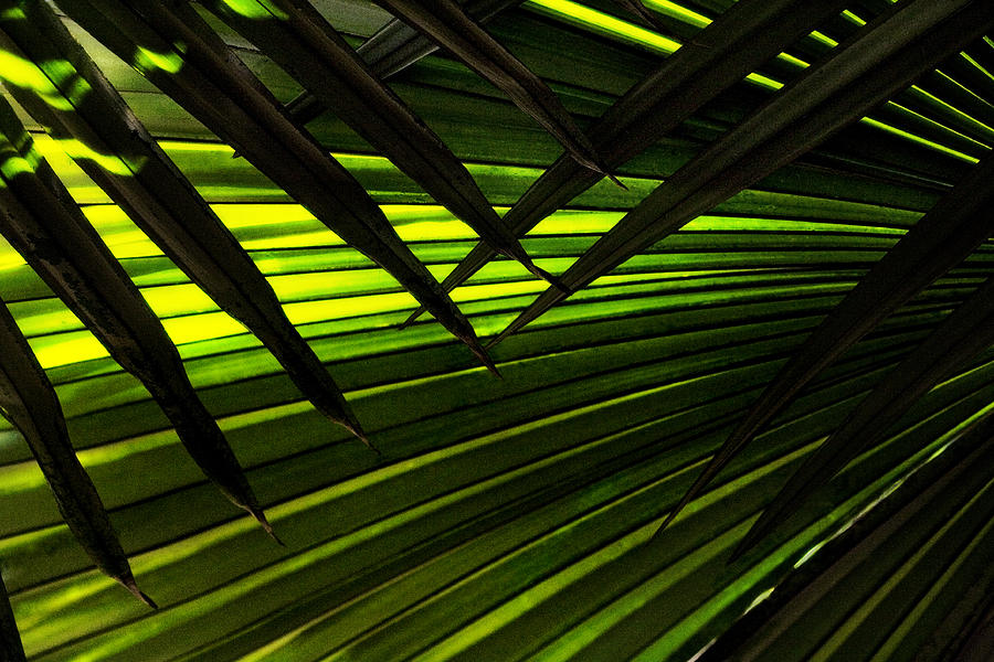 Palm Photograph - Leaves Of Palm Color by Marilyn Hunt