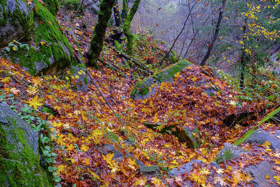 Deer Creek Photograph - Leaves of the Forest by Robin Mayoff