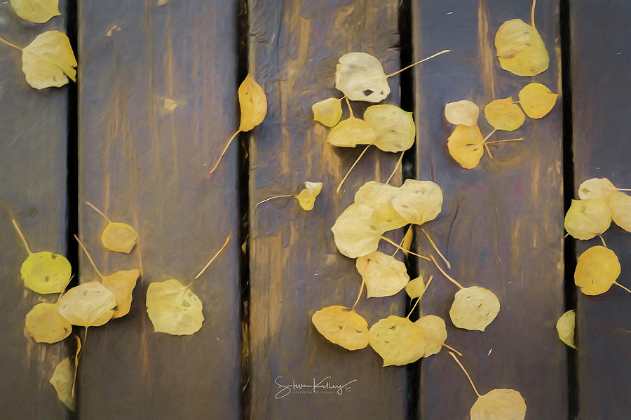 Leaves on Planks by Steve Kelley