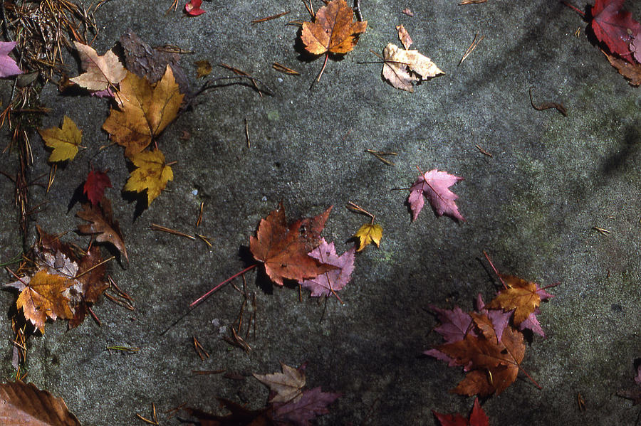 Nature Photograph - Leaves On Stone by Randy Muir