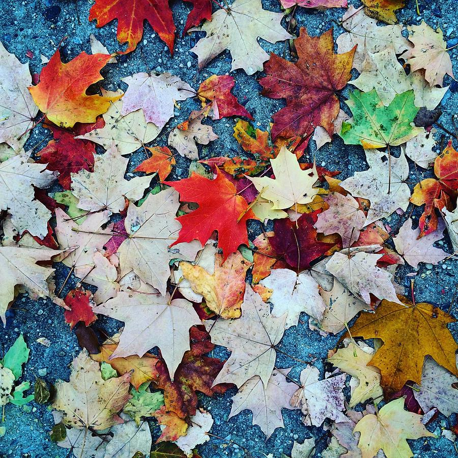 Leaves Photograph - Leaves On The Sidewalk by Robert Nguyen