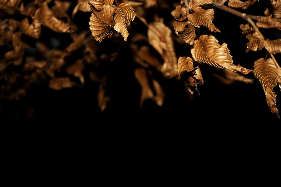 Leaves Photograph - Leaves by Sibeal Colley