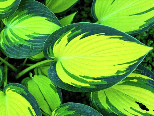 Leaf Digital Art - Leaves by Sterling Haidt