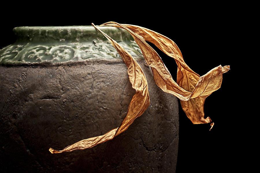 Leaves Photograph - Leaves by Tom Mc Nemar