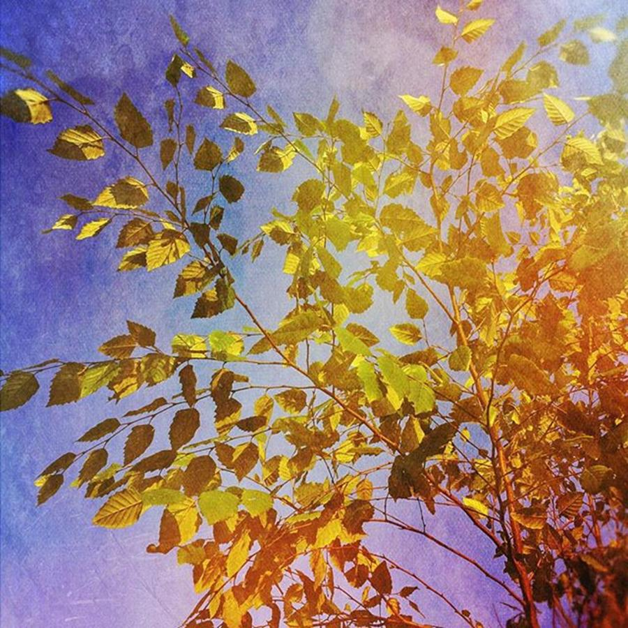 Colorful Photograph - Leaves #trees #colorful #mexturesapp by Joan McCool