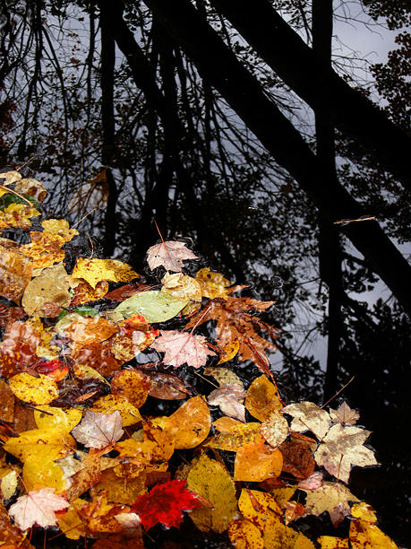 Leaves With Black Bark Photograph by Joanne Baldaia