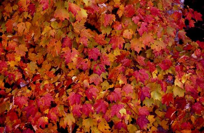 Leaves Photograph - Leaves With Fall Colors by George Ferrell