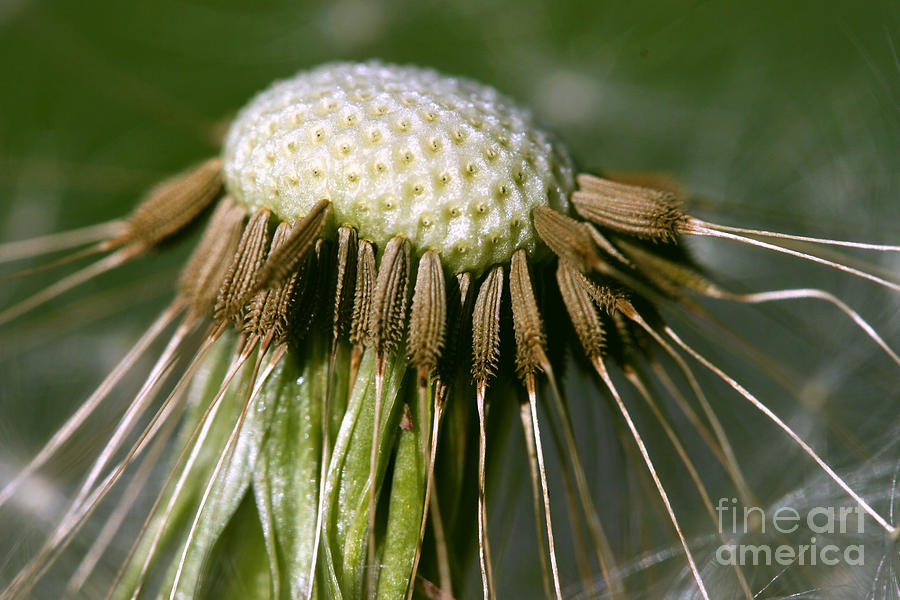 Weed Photograph - Leaving The Egg by Steve Augustin