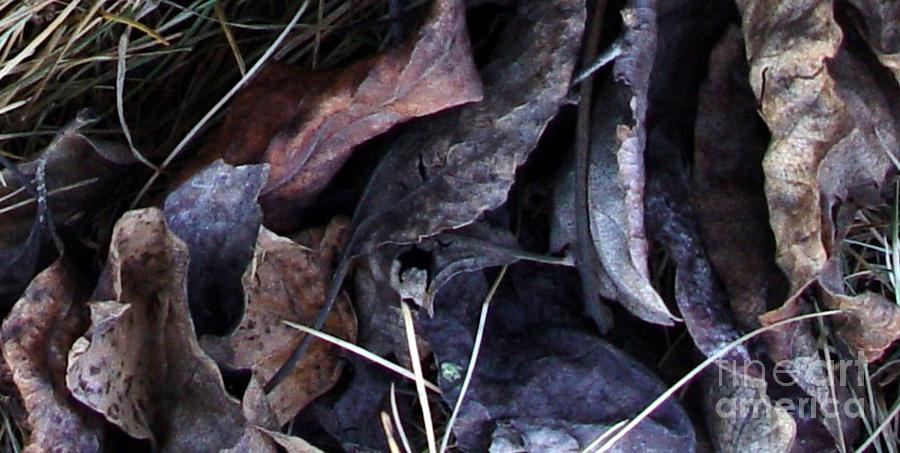 Leaves Photograph - Leavings by Ron Bissett