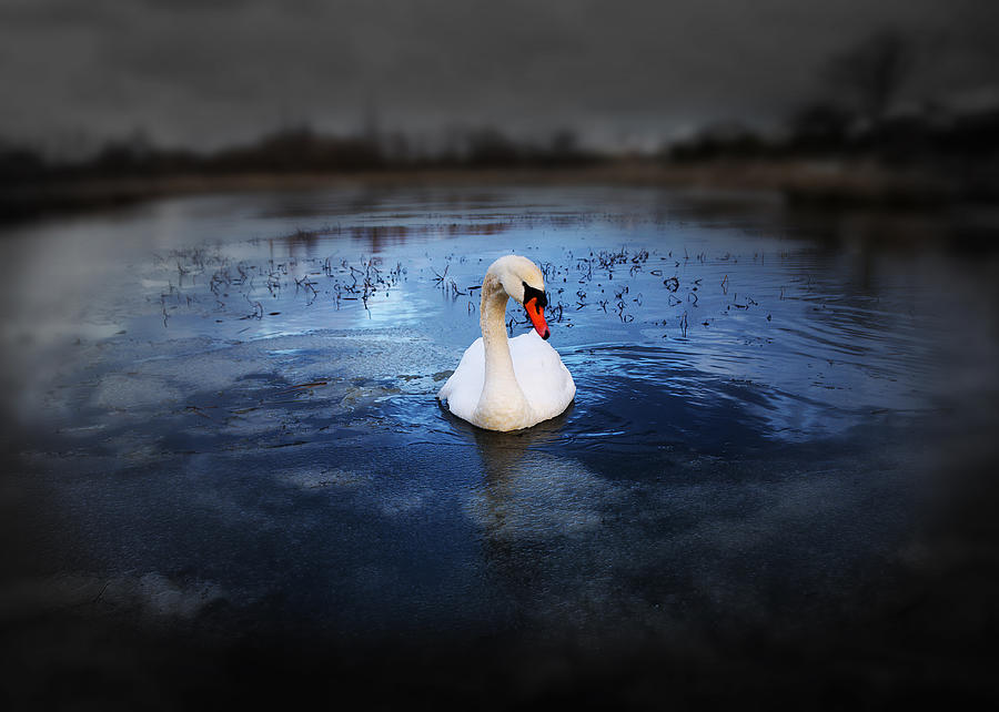 Adorable Photograph - Left Behind by Svetlana Sewell