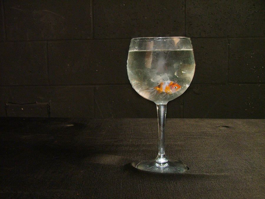 Goldfish Photograph - Left Penniless After The Market Crashed In 84 by Geerah Baden-Karamally