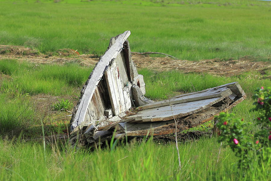 Rotting Photograph - Left To Rot by Brian Pflanz