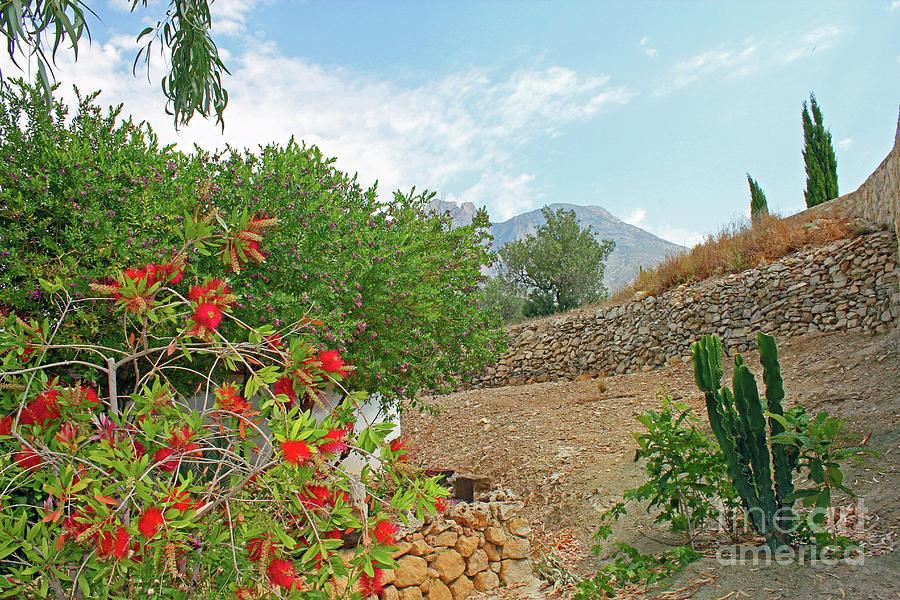 Cacti Photograph - Lehua Near Finestrat by Nieves Nitta