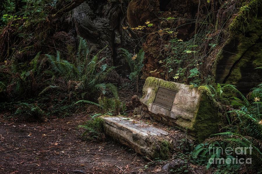 Leiffer Grove Bench Photograph