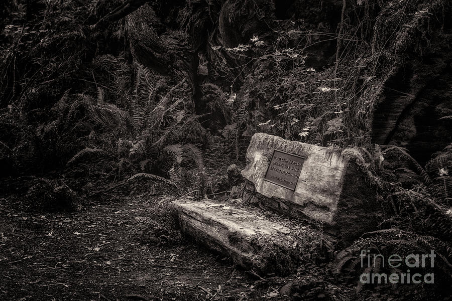 Leiffer Grove Bench Toned Photograph