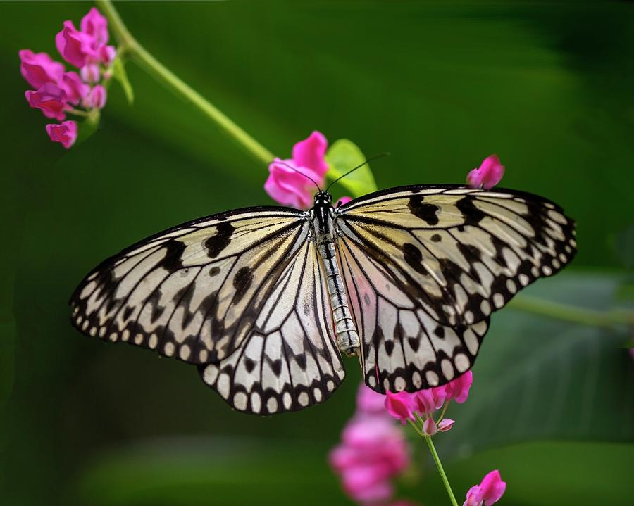 Butterfly Photograph - Leisurely Lunch by Harriet Feagin