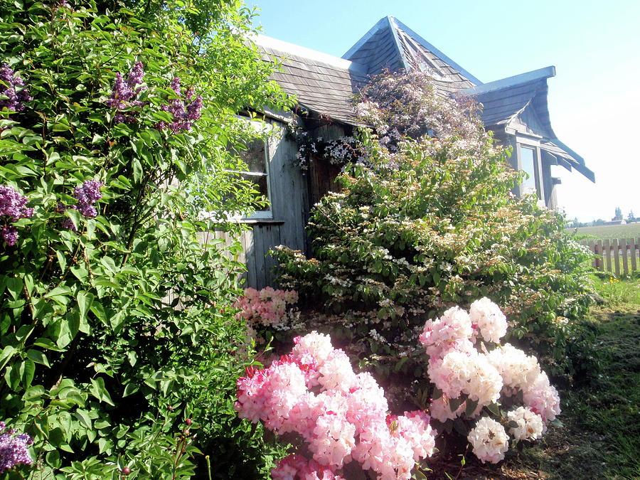 Art Studio Mixed Media - Garden Gallery Summer 2012 by Leizel Grant
