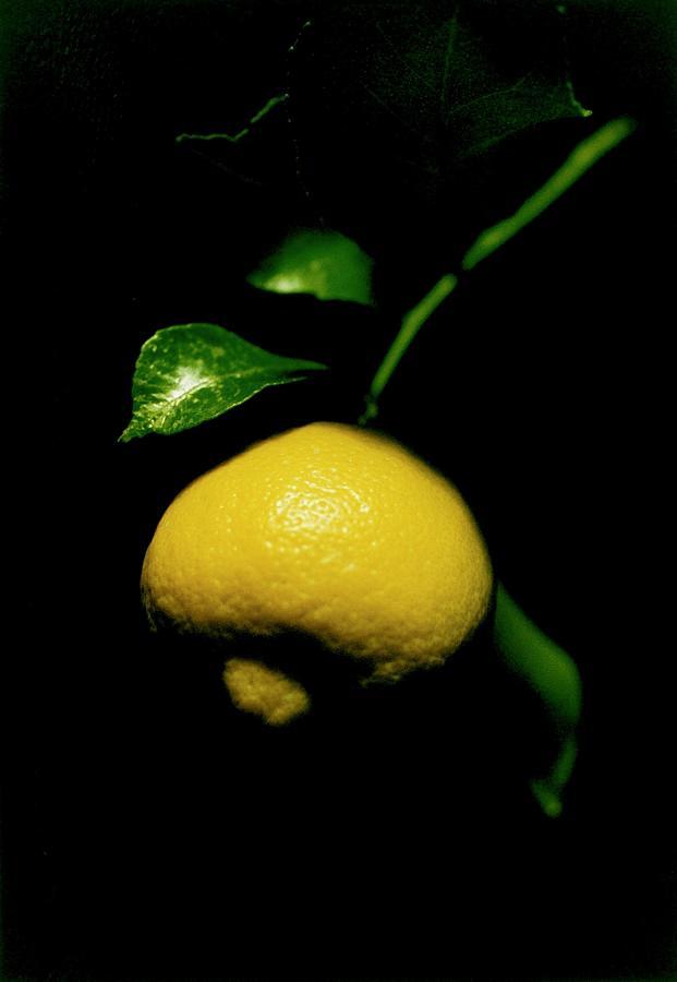 Lemon Photograph - Lemon With Leaves by Valerie Brown