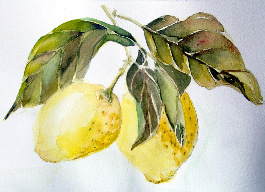 Watercolor Painting - Lemons by Mindy Newman