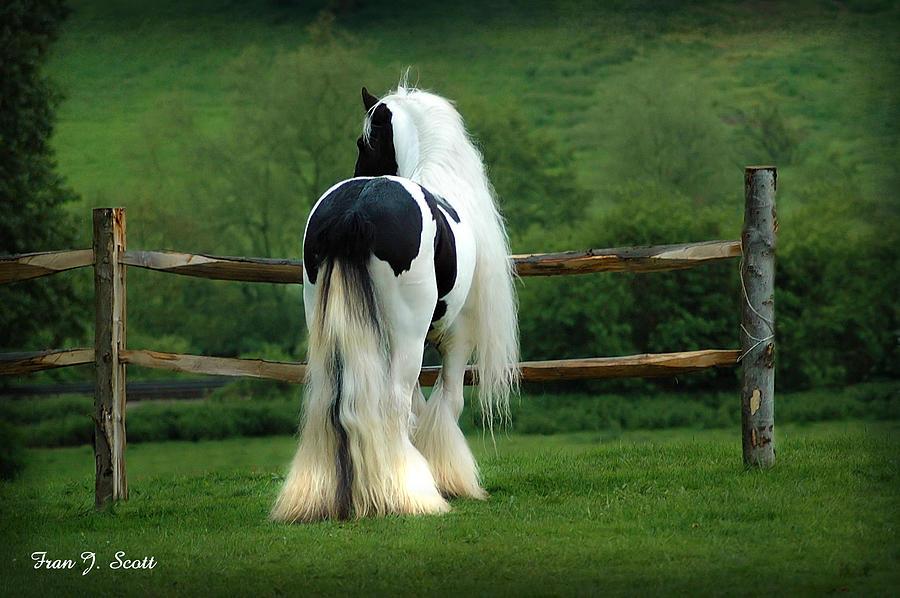 Gypsy Stallion Photograph - Lenny by Fran J Scott
