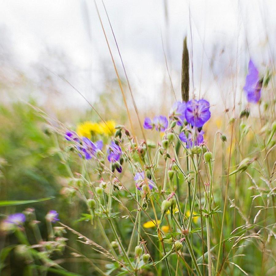 Grass Photograph - #lensbaby #composerpro #sweet35 #floral by Mandy Tabatt