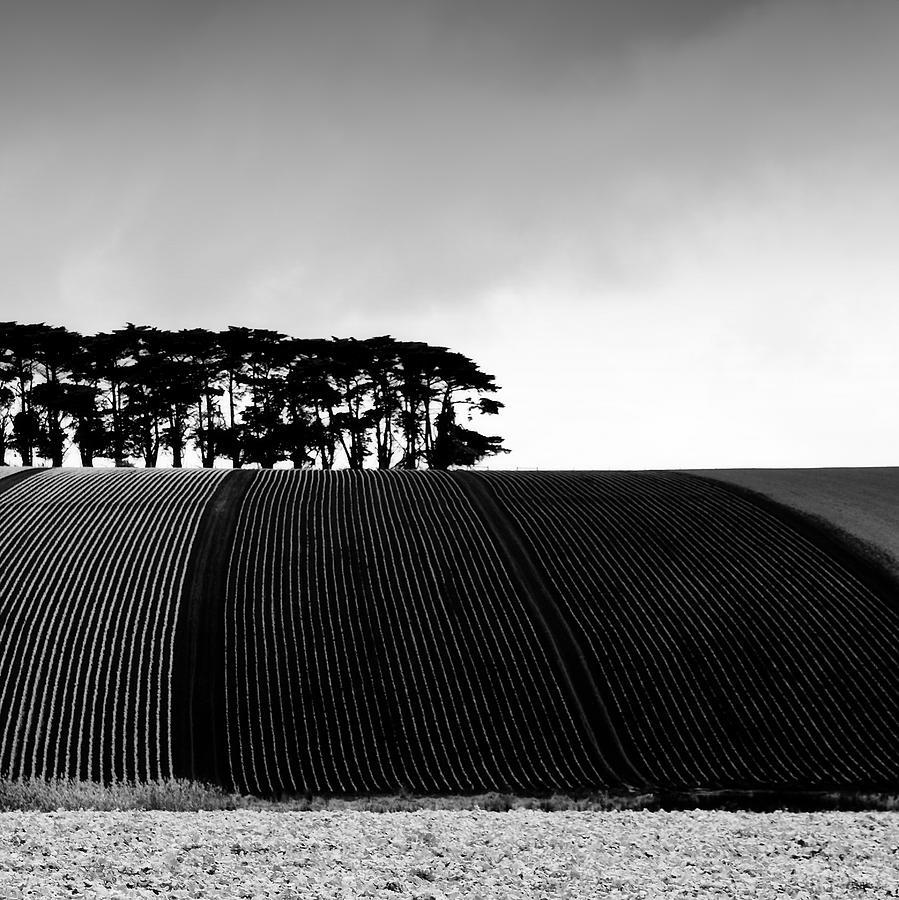 Trees Photograph - Leongatha by Mihai Florea