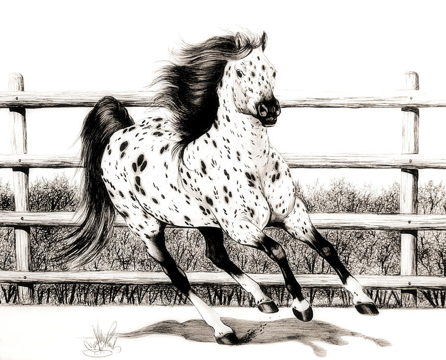 Horse Drawings Drawing - Leopard Appaloosa Loping by Cheryl Poland