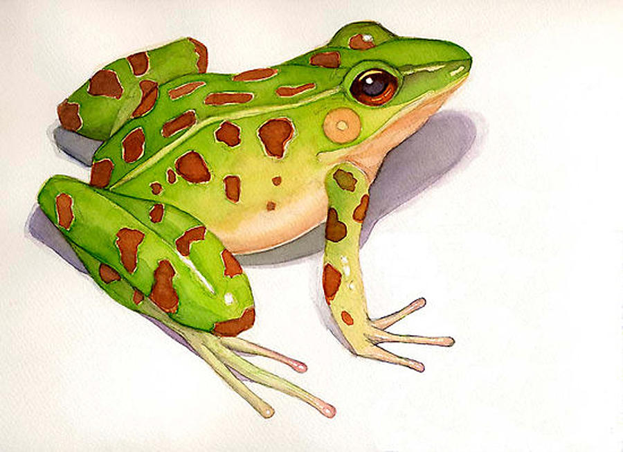 Frog Painting - Leopard Frog by Greg Marquez