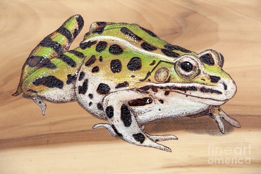 Frog Photograph - Leopard Frog No 1 by Dwight Cook