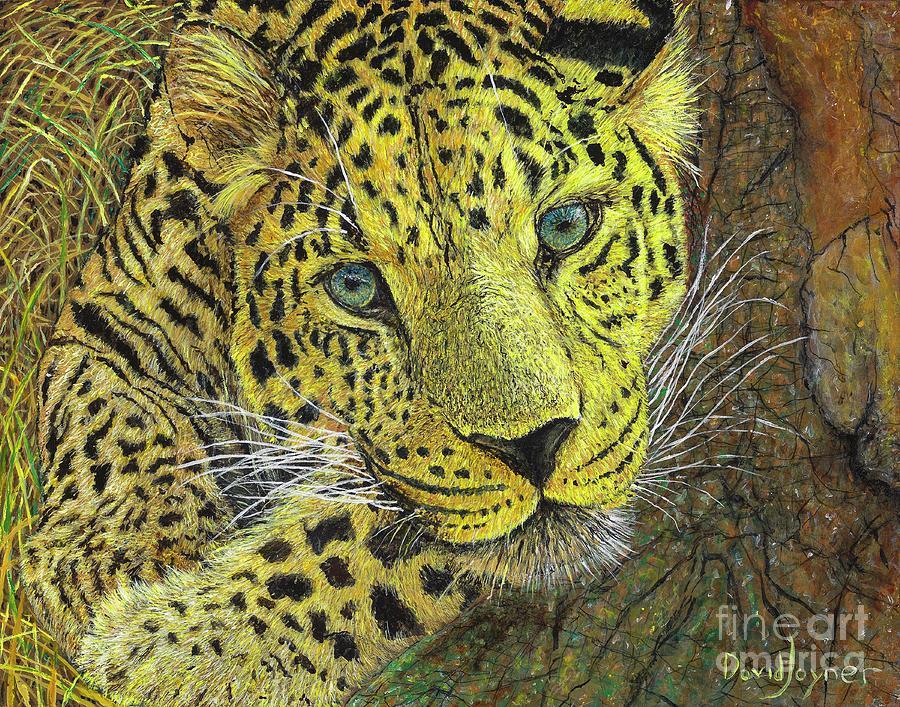 Leopard Gaze by David Joyner