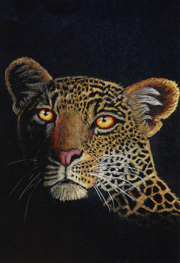 Leopard Drawing - Leopard In The Dark by Lorraine Foster
